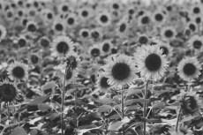flower869-3