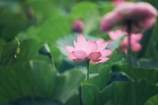 flower879