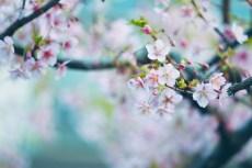 flower934-2
