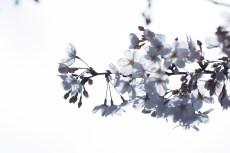 flower943
