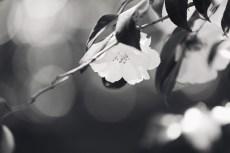 flower952-3