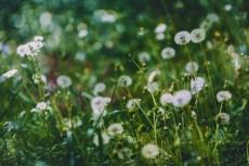 flower1002