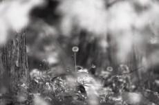 flower1003-3