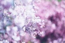 flower1008-2