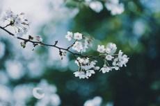 flower968