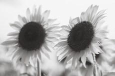 flower980-1-3