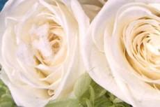 flower033
