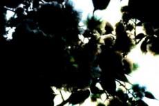 flower083