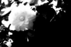 flower199