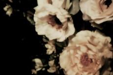 flower080