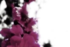 flower204
