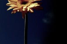 flower241