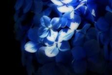 flower244
