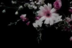 flower264