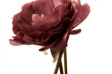 flower292