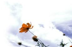 flower316