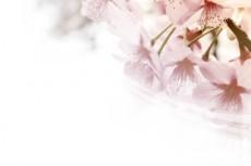 flower324