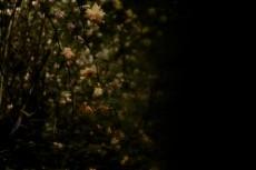 flower336