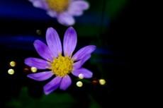 flower342