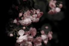 flower346