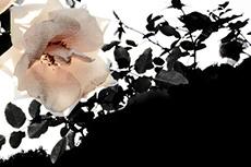 flower162