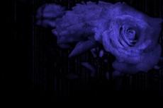 flower296