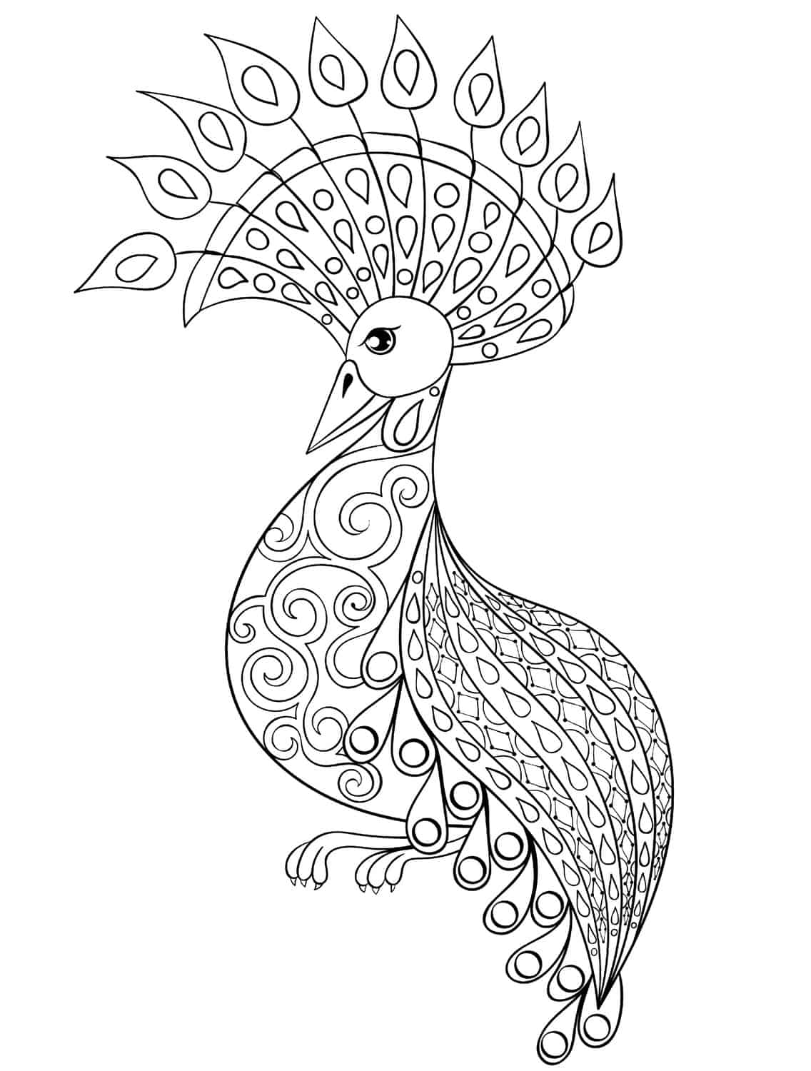 Coloring pages of peacocks - Printable Coloring Pages Peacock Download Your Jpeg Here Download