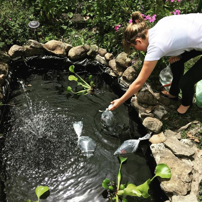 Fi stocking the backyardpond with goldfish and tadpoles gardening familyfun