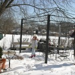 Taking care of the winter birds