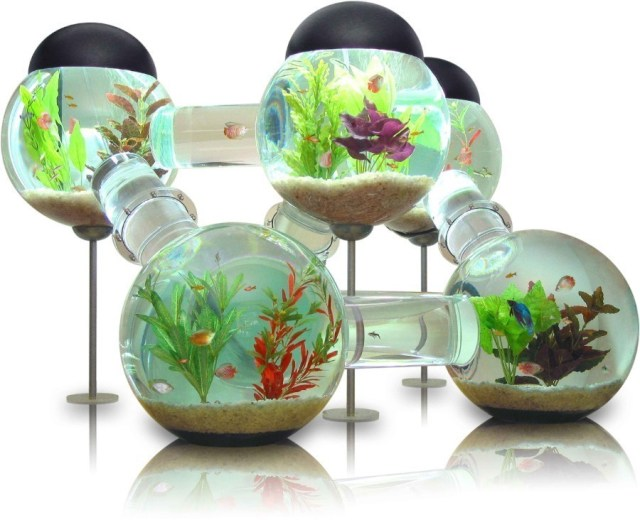 You can dress your aquarium with as many marine decorations as you
