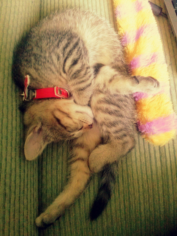 【∧_∧】 猫を飼っている人だけが知っている猫の真実www