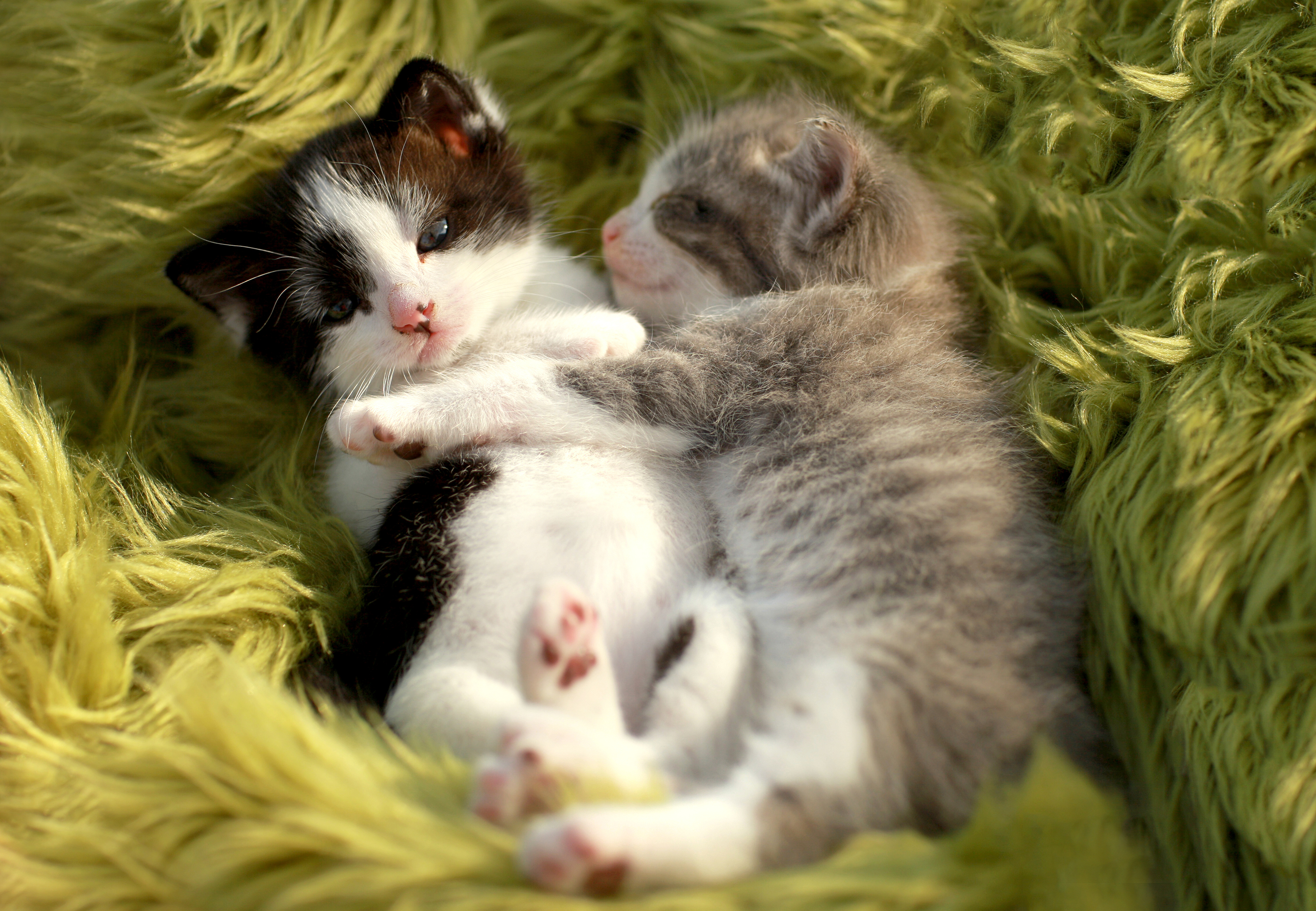 Cute Baby Sleeping Wallpapers Kittens In A Box Accidentally Shipped From Los Angeles To