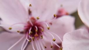 Blüte mit Makro-Objektiv
