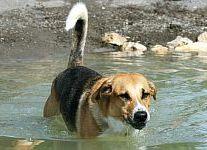 Hundepool