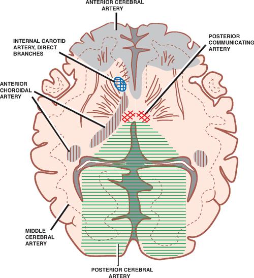 Vascular System Neupsy Key