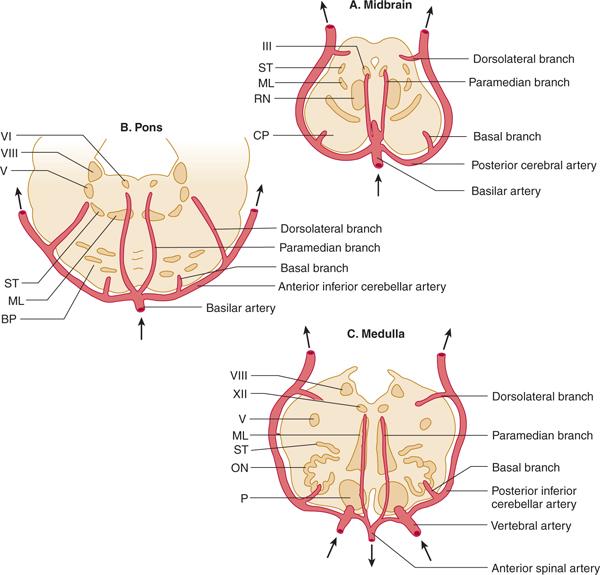Vascular Supply of the Brain Neupsy Key