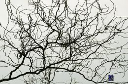 artificial-neural-network-neuron