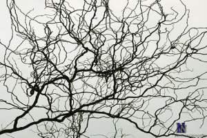 artificial-neural-network-neuron