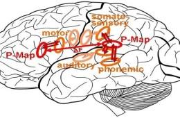 brain-map-computational
