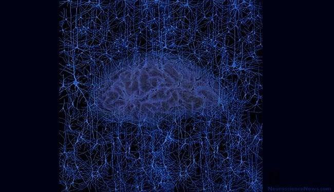 brain-neuroscience-network