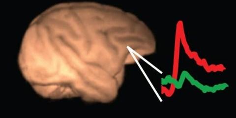 consciousness-brain-wave