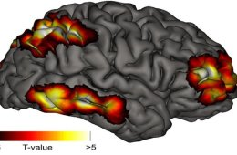 meta-consciousness-brain-map
