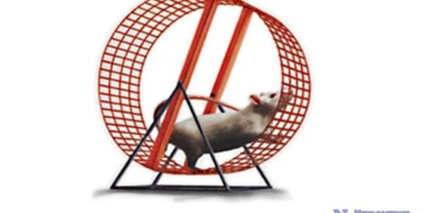 mouse-running-treadmill