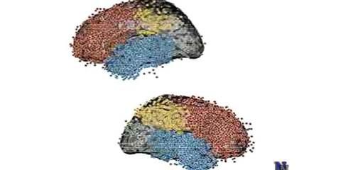 neuroscience-time-travel
