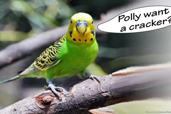 DNA Sequenced for Parrot's Ability to Parrot ...