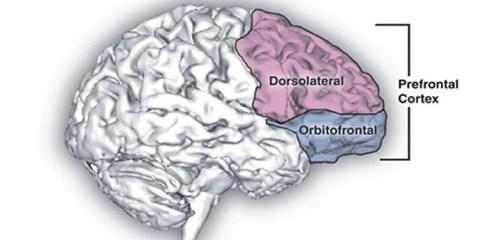 prefrontal-cortex-public