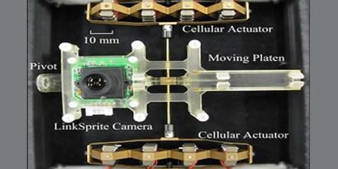 robotic-camera-human-eye-muscles