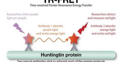 tr-fret-huntingtin-protein