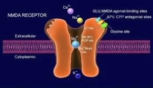 The image shows an NMDA receptor in action.