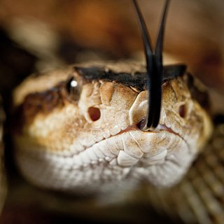 What are some books about the evolutionary steps of snakes?